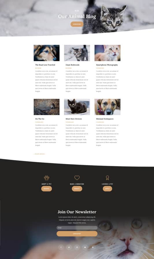 Animal Shelter Web Design 2