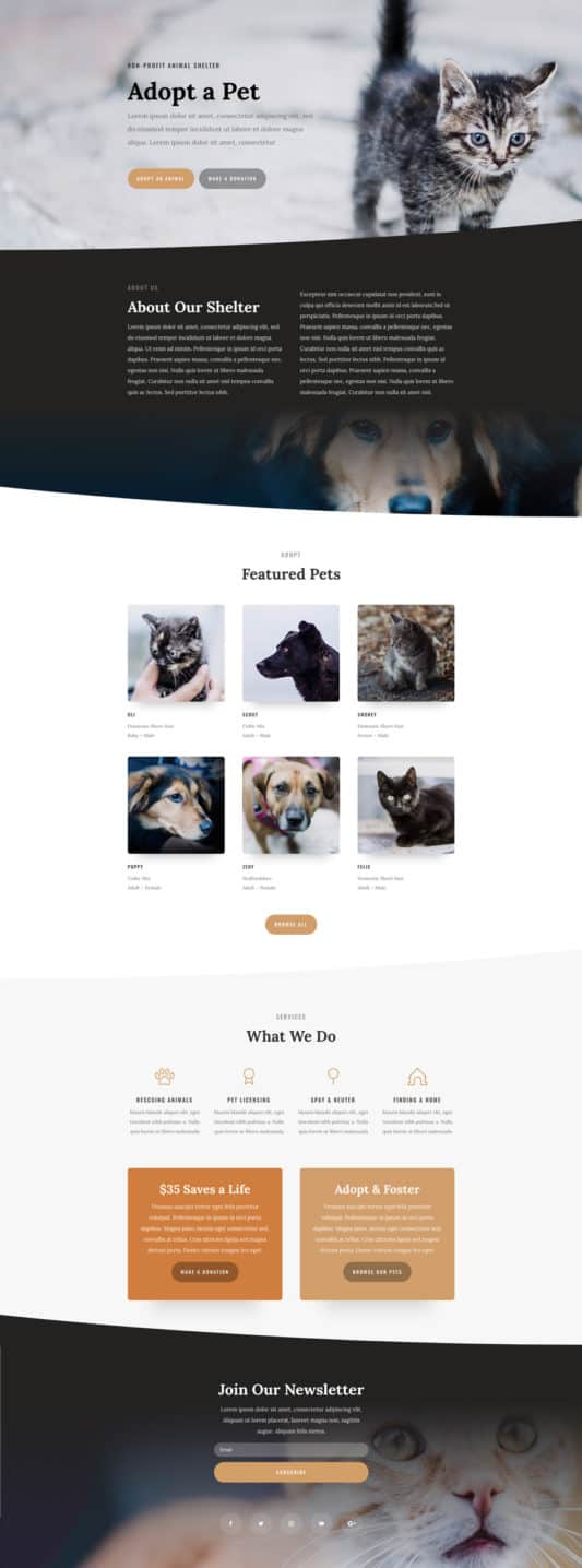 Animal Shelter Web Design 5
